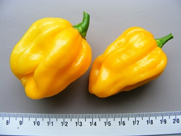 Peper Surinam Yellow