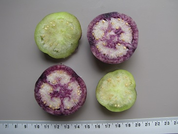 Tomatillo groen en paars