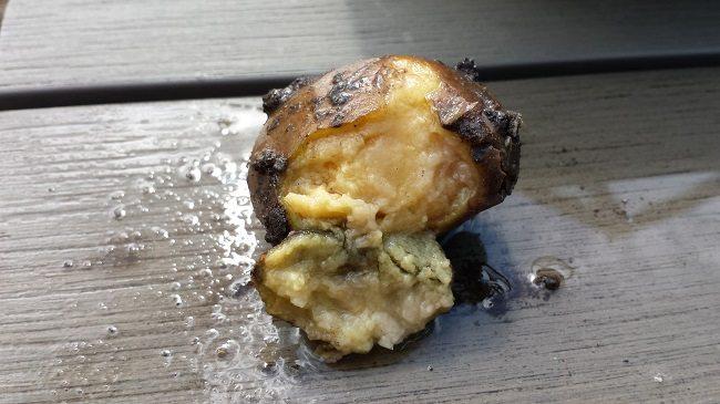 Aardappel waterrot
