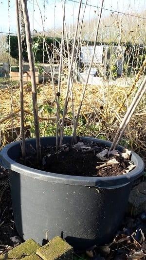 Aardpeer winter pot