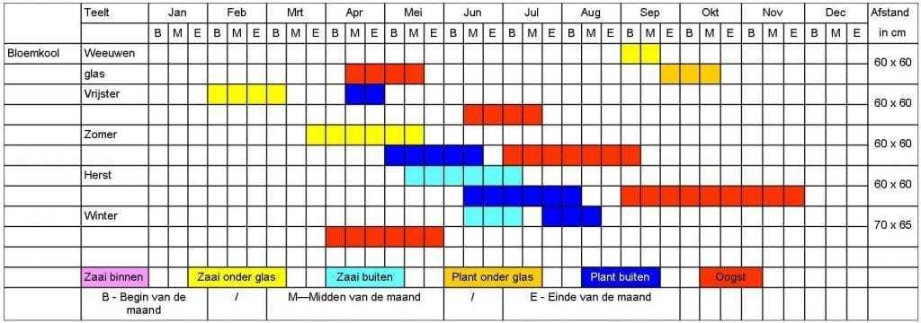 Bloemkool tabel