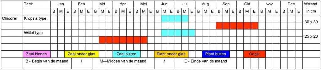 Chicorei tabel