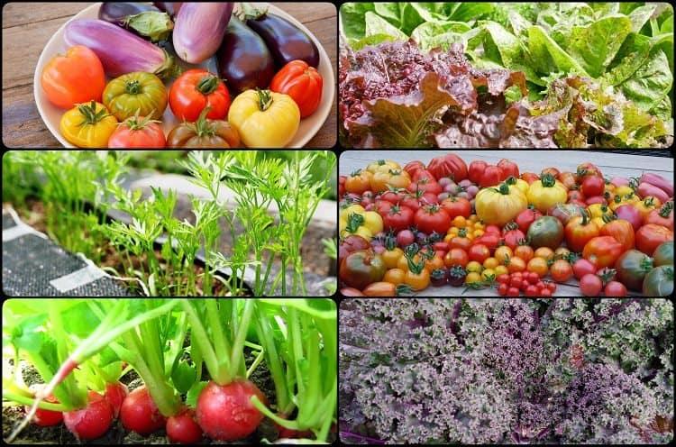groenten - diana's mooie moestuin