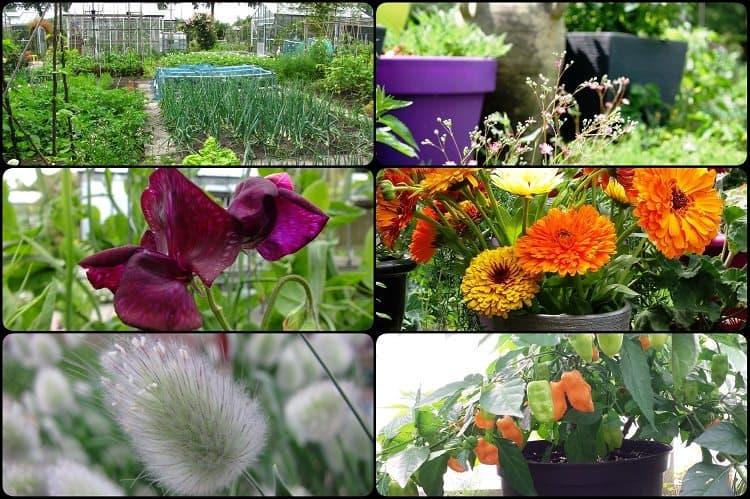 Tuin overig diana 39 s mooie moestuin for Diana tuin