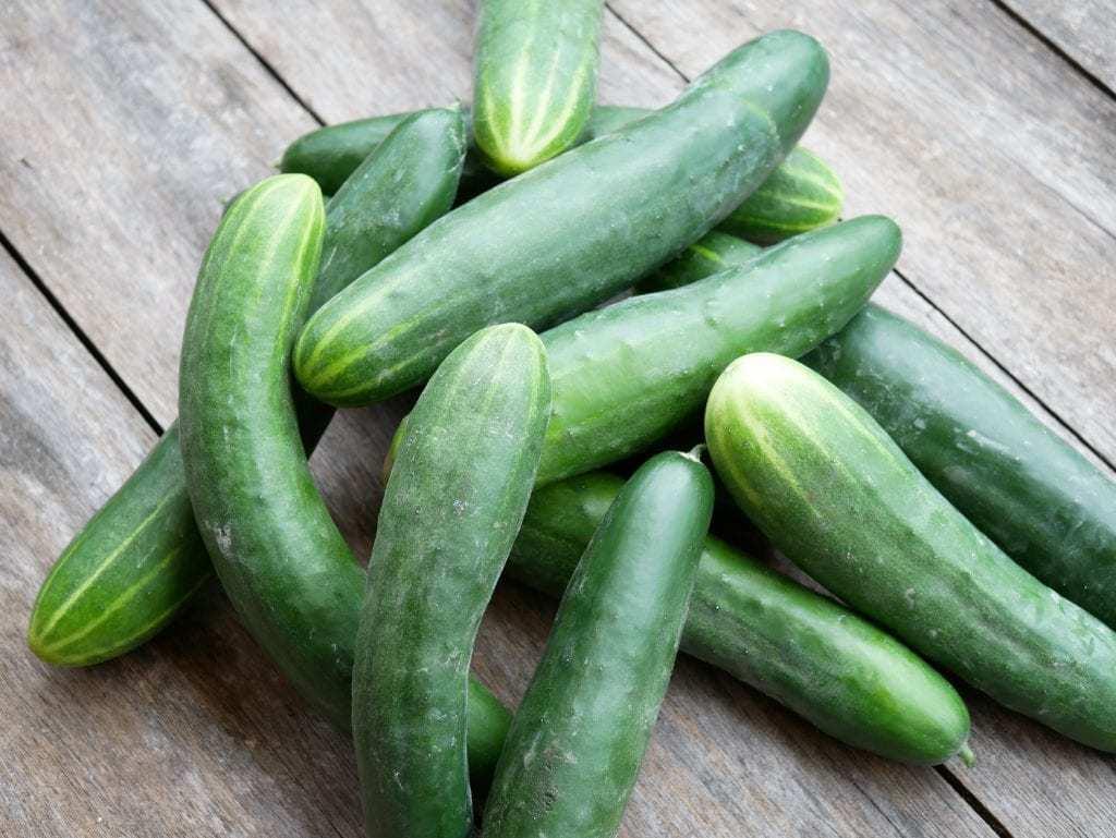 Komkommer oogst
