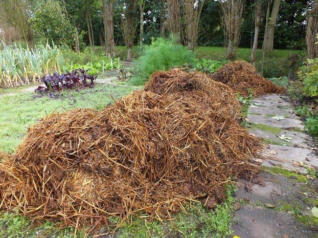 Mest Voor Tuin : Mest dianas mooie moestuin