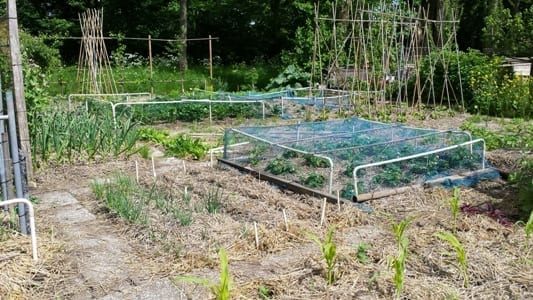 Overzicht tuin 21-5-15