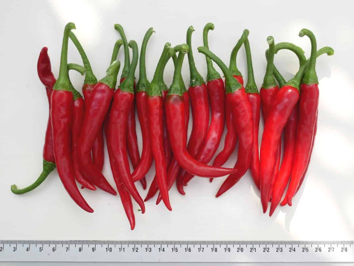 Cayenne Ring of Fire