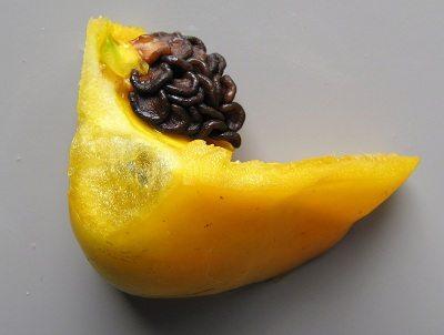 Peper Rocoto Canario zaden
