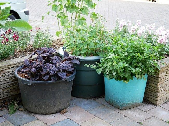 Vaste Planten In Pot Buiten.Kruiden En Fruit In Potten Diana S Mooie Moestuin