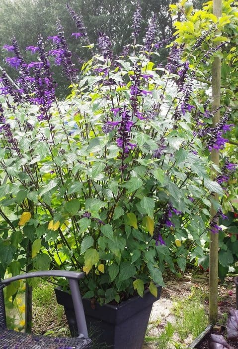 Vaste Planten In Pot Buiten Winterhard.Bloemen In Potten Diana S Mooie Moestuin