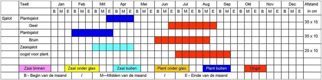 Sjalot tabel