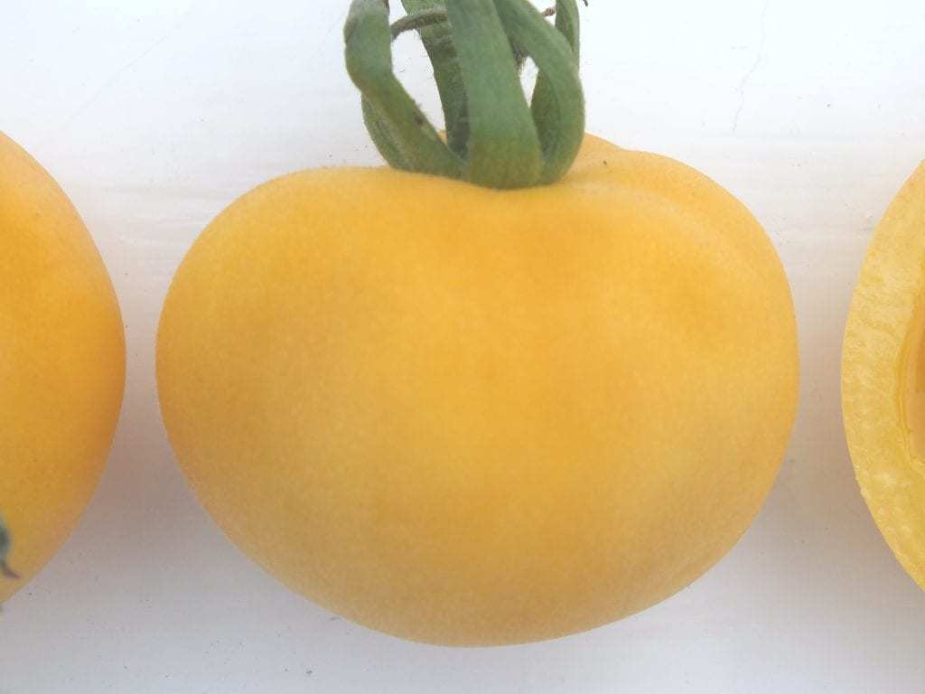 Tomaat Garden Peach