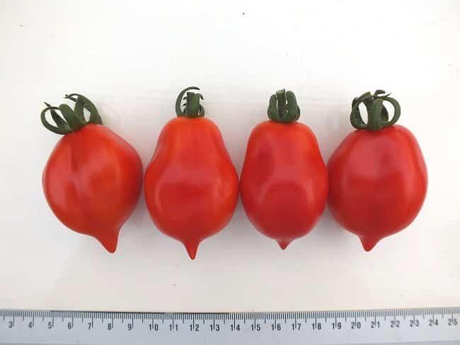 tomaat-mount-vesuvius