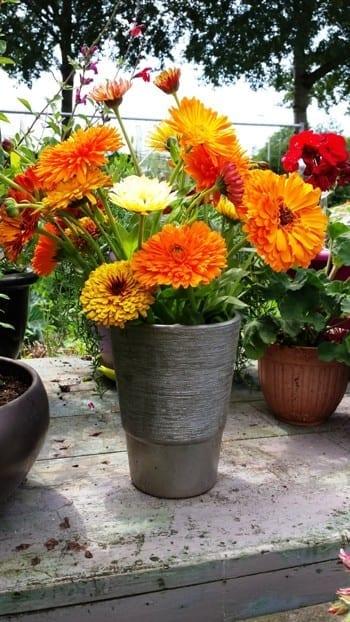 Vaas met Calendula