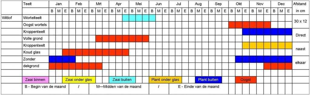 Witlof tabel